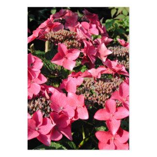 Vanlig hortensia. Rosa Flowers. Set Av Breda Visitkort