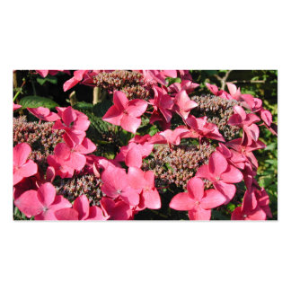 Vanlig hortensia. Rosa Flowers. Visitkort Mall