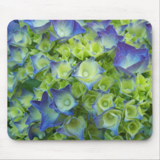 Vanlig hortensia slår ut blommigt musmatta