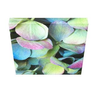 VANLIG HORTENSIAMång--färg petals --- Canvastryck