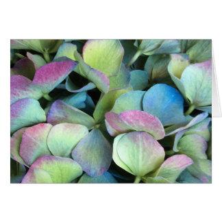 VANLIG HORTENSIAMång--färg petals --- Hälsningskort