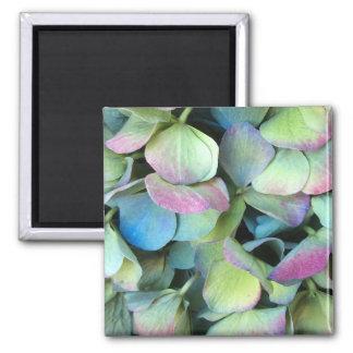 VANLIG HORTENSIAMång--färg petals --- Magnet