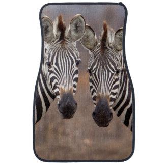 Vanlig zebror, Kruger nationalpark Bilmatta