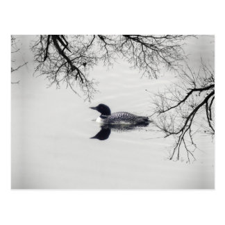 Vanligt Loonsimmor i en nordlig sjö i vinter Vykort
