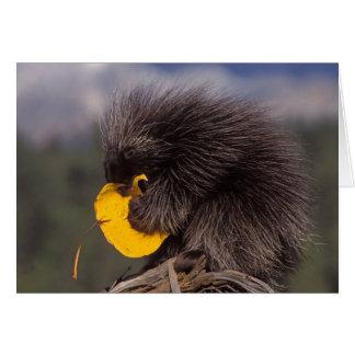 vanligt porcupine, Erethizondorsatum, bebis Hälsningskort