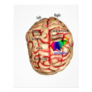 Vänstert och rätsida av hjärnan brevhuvud