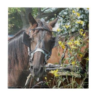 Väntande amish häst kakelplatta