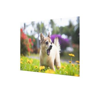 Vår älsklings- hundkekai. Han är till hälften Canvastryck