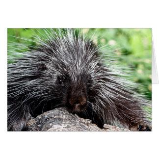 Vara slö för Porcupine Hälsningskort
