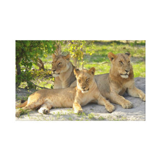 Vara slö lejonkanvastrycket canvastryck