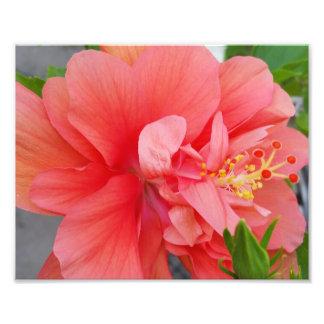 Vårblomma Fototryck