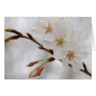 Vårblommar OBS Kort