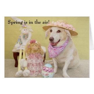 Våren är i luften! hälsningskort