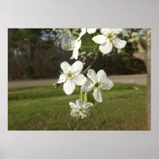Våren har fjädrat! poster