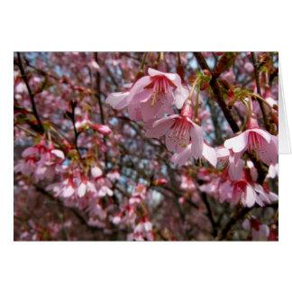 Våren har fjädrat! hälsningskort