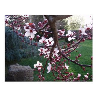 Våren har fjädrat vykort