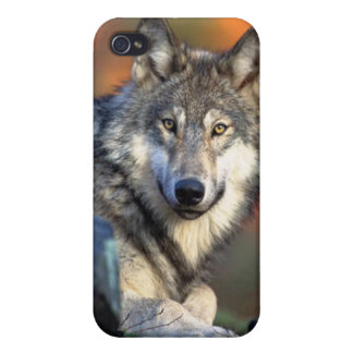 Vargen fotograferar iPhone 4 cover