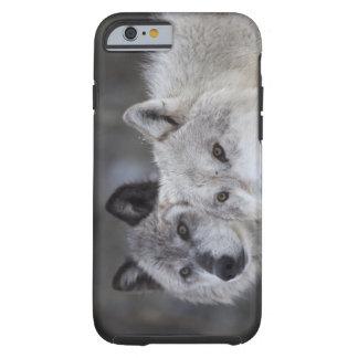 Varger (Canus lupus) från västra Yellowstone. Tough iPhone 6 Skal