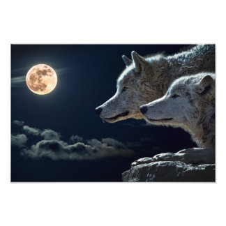 Vargvarger som tjuter på fullmånen på natten fototryck