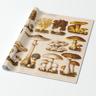Variation för vintage1800schampinjonen plocka presentpapper