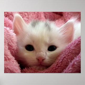 Varm kattunge i en filt poster