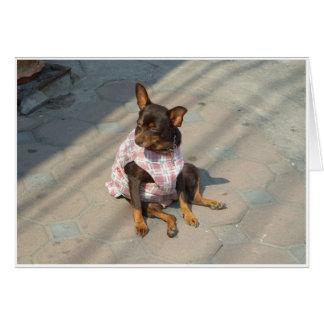 Värma sig hunden hälsningskort