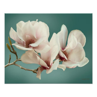 VårMagnoliablommar, rosa, mjuk kricka Poster
