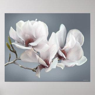 VårMagnoliablommar, rosa, mjuka grå färg Poster