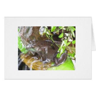 vårt bullfrogfoto hälsningskort
