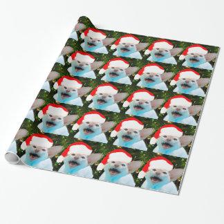 Väsningkatt i en Santa hatt Presentpapper