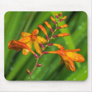 Våt orange blommamousepad musmatta