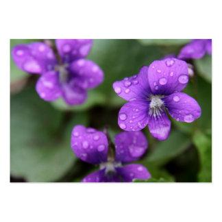 Våt purpurfärgad Violetsvisitkort Set Av Breda Visitkort