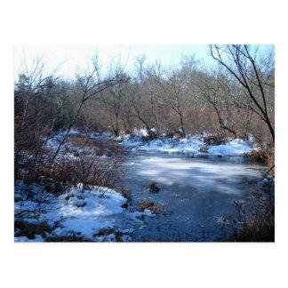 Våtmarkdamm i vinter vykort