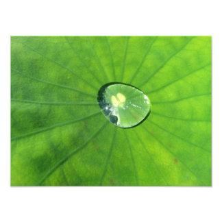 Vatten på en Lilypad Fototryck