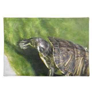 Vatten- sköldpadda som får ut ur vatten bordstablett