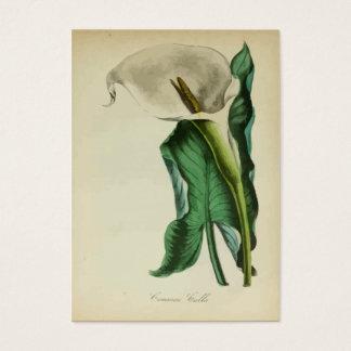 Vattenfärg för blomma | för vintageCallalilja Visitkort