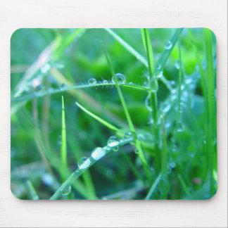 Vattenliten droppe på gräs musmatta