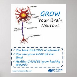 Väx din hjärnNeuronsBrainology® affisch