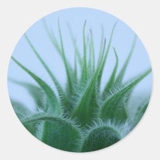 växt runt klistermärke