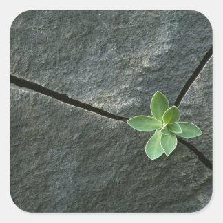 Växt som växer i knäckt stenblock fyrkantigt klistermärke