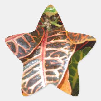 växter 426 stjärnformat klistermärke