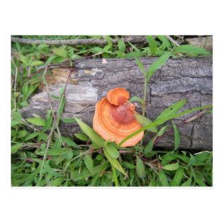 Växter Costa Rica Vykort