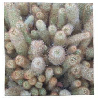 Växter för öken för Southwestkaktuskaktus Tygservett