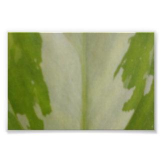 Växtlövåder Fototryck