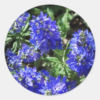 Veronica-blomma Runt Klistermärke