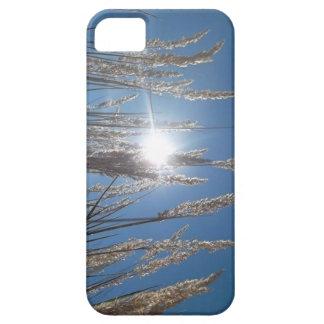 Vete, himmel och soliphone case iPhone 5 skydd
