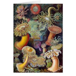 Vetenskaplig illustration för vintagehavsanemoner hälsningskort