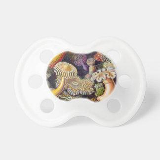 Vetenskaplig illustration för vintagehavsanemoner napp