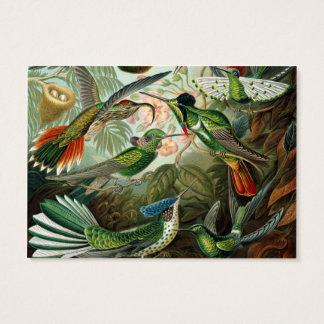 Vetenskaplig illustration för vintagehummingbirds visitkort