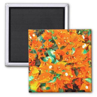 Vibrerande orange Bougainvilleablommor